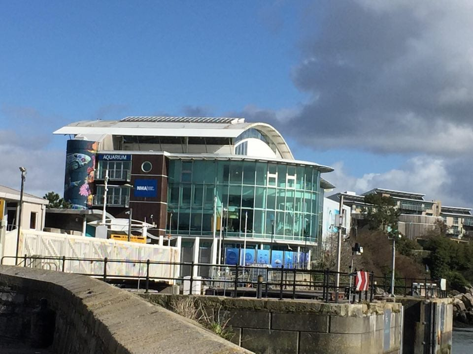 Plymouth Aquarium, things to do in plymouth with kids, plymouth barbican, plymouth uk
