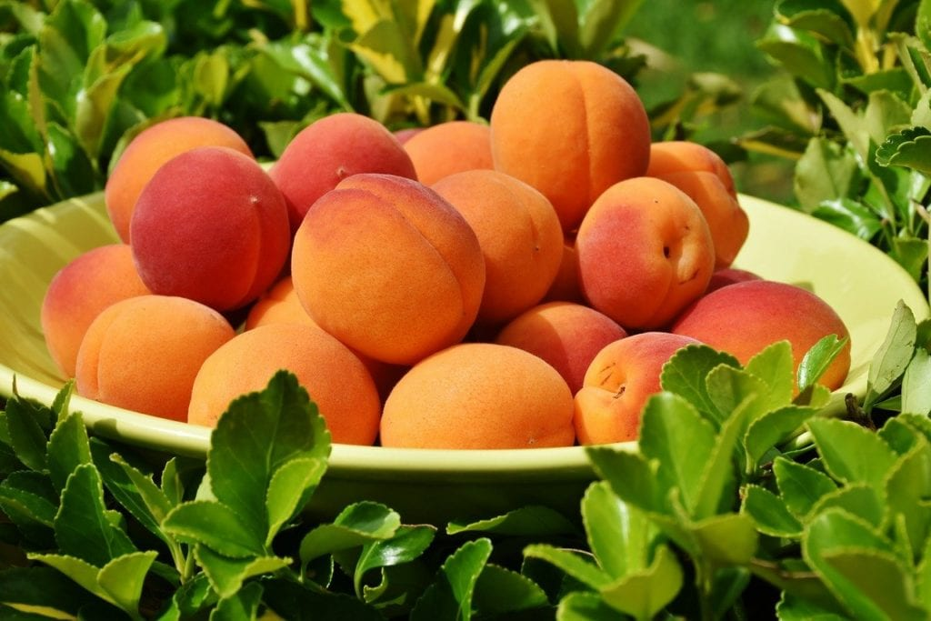 apricots, apricot, fruit, food market, packpacking athens