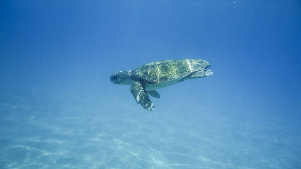 turtle, water turtle, portrait