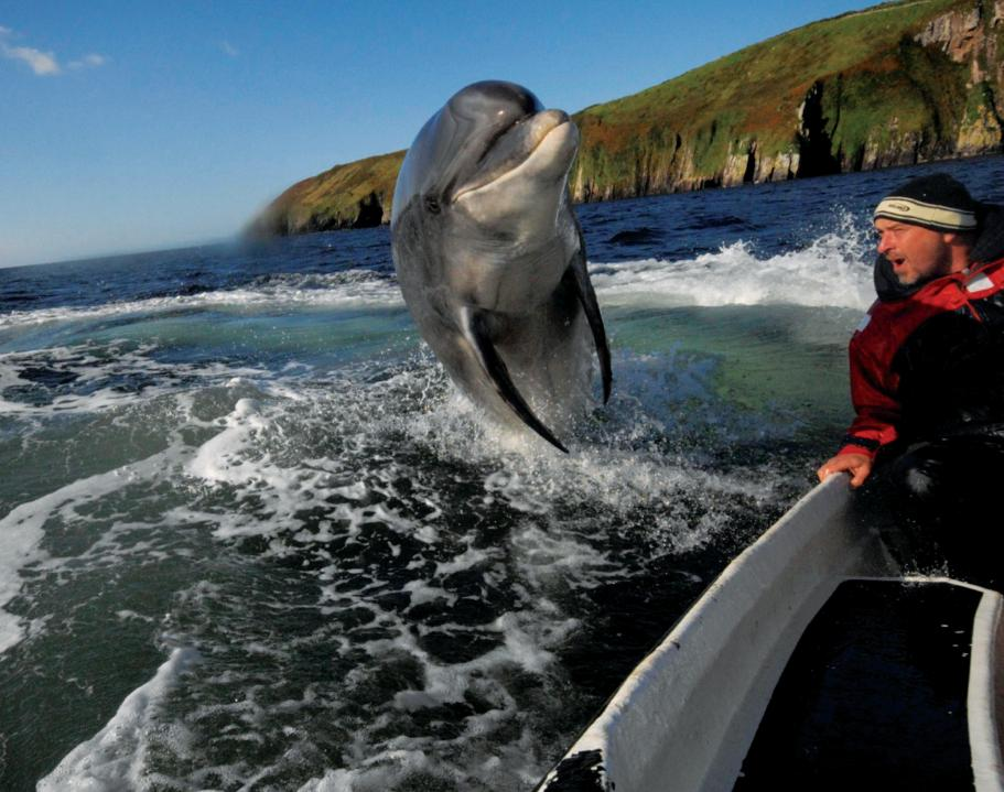 Best European city breaks with kids | Travels With Eden Blog, dingle island dolphin