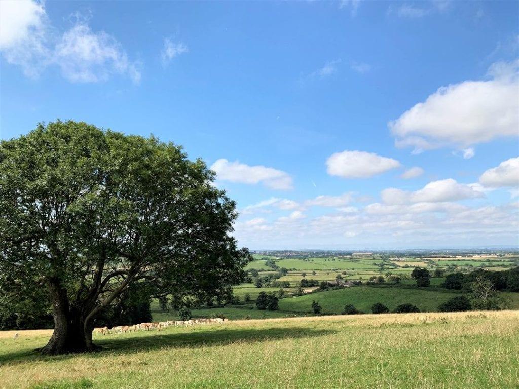 dyrham park, Bristol, national trust, bristol day trips with kids, nature park, UK, south west uk