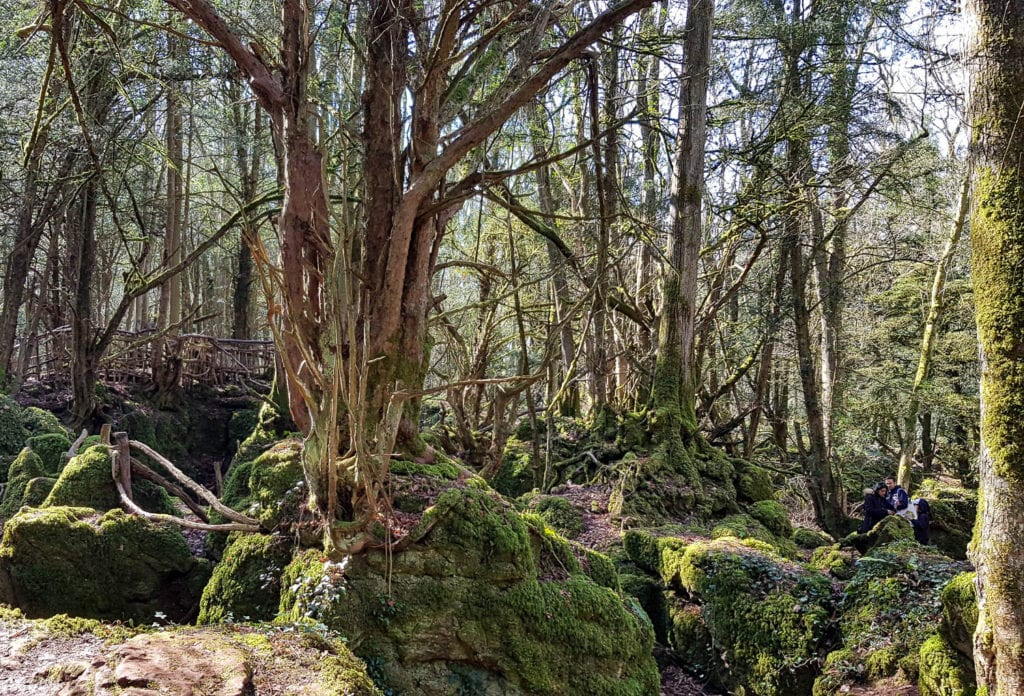 forest of dean, mummytravels, woods
