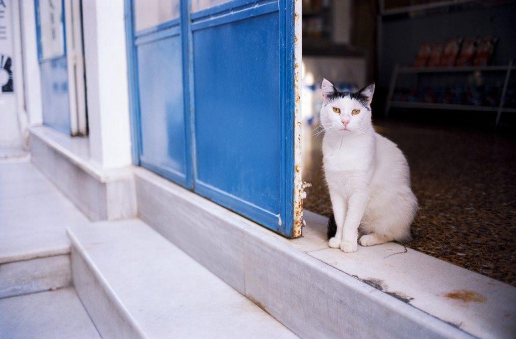 cat, pet, animal-3439500.jpg